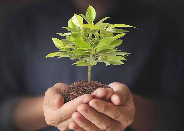 Reforestation energy boost